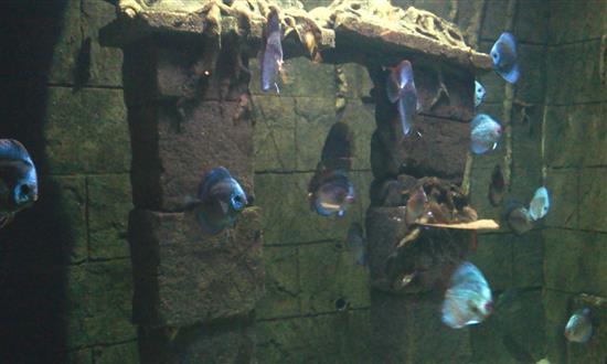 Mengagumi hidupan air di underwater world langkawi